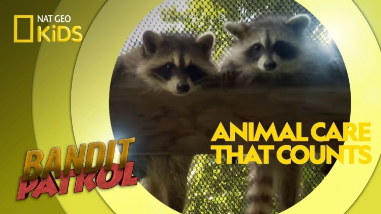 Animal Care That Counts | Bandit Patrol