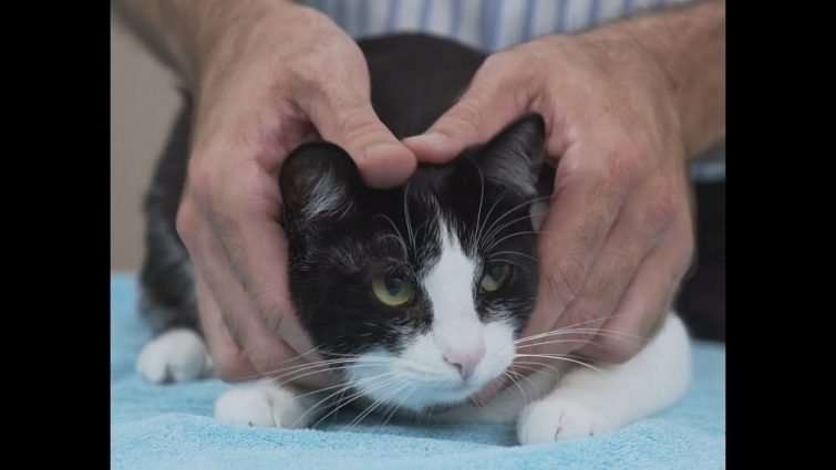 How to pick up a cat like a pro – Vet advice on cat handling.