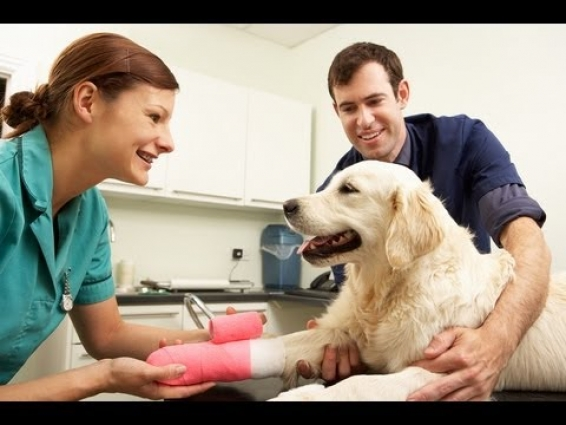 Steps to Becoming a Veterinarian