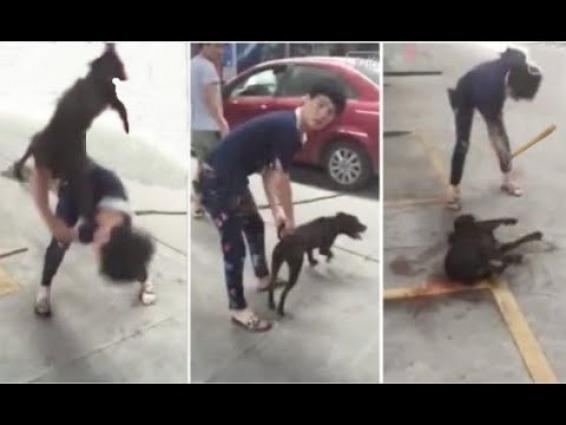 Tоrtսred Puppy Rescued from BRՍTAL MAN! ! HAPPY ENDING ANIMAL RESCUE